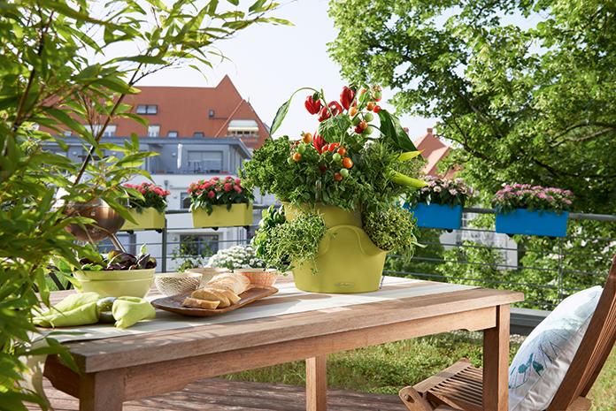An Urban Garden